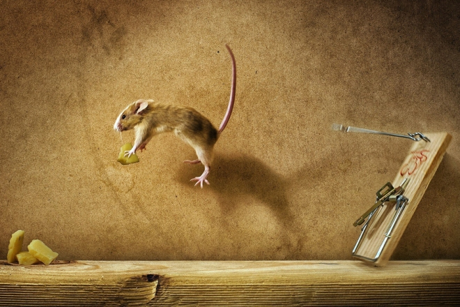 mouse-jumping-for-cheese-wallpaper-1920x1080-other-images-cheese-wallpaper CROPPED